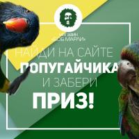 Найди на сайте попугайчика и забери ПРИЗ!