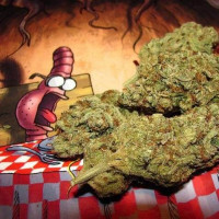 Лечебная марихуана рецепты national geographic марихуана