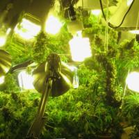Ультрафиолетовая лампа для марихуаны освещения марихуаны