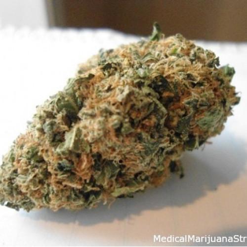 Семена марихуана Auto Sugar Gom Fem