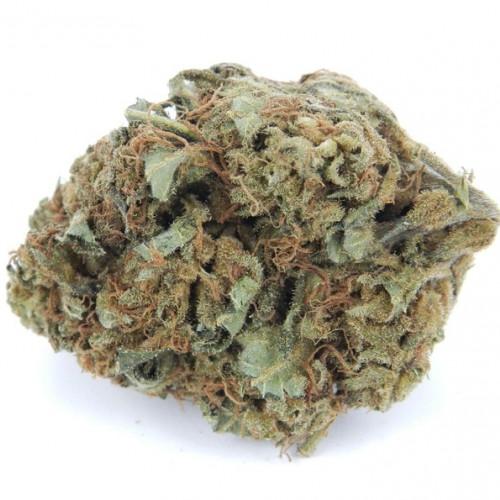 Семена марихуана Pulsar Feminised