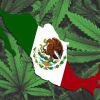 Мексика: Обсуждается проект закона о полной легализации