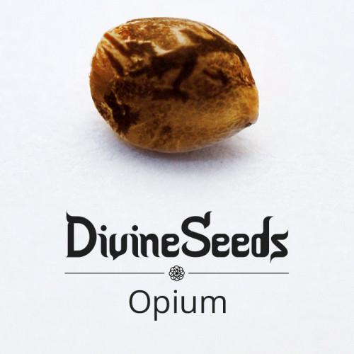 Семена марихуана Opium - фото 1