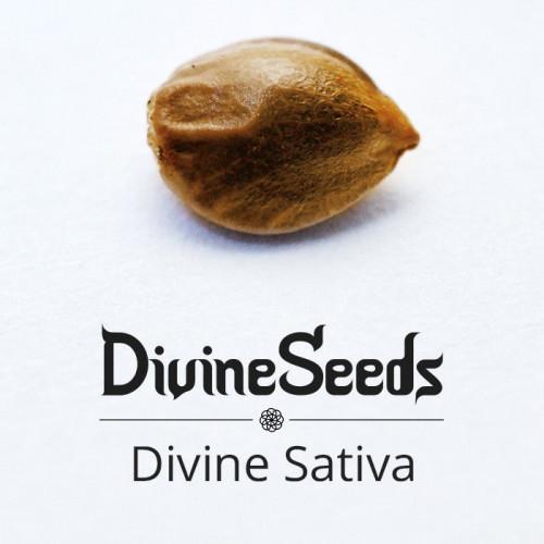 Семена Divine Sativa - фото 1