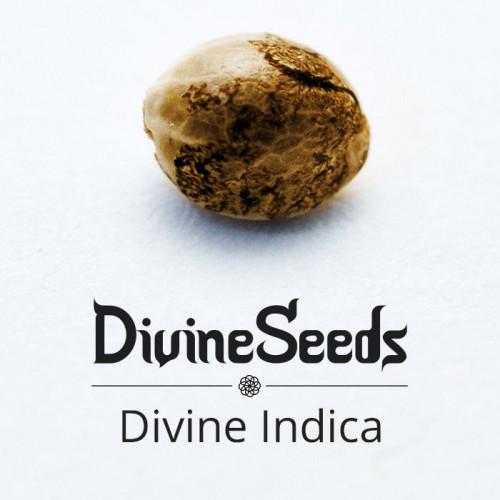 Семена Divine Indica - фото 1