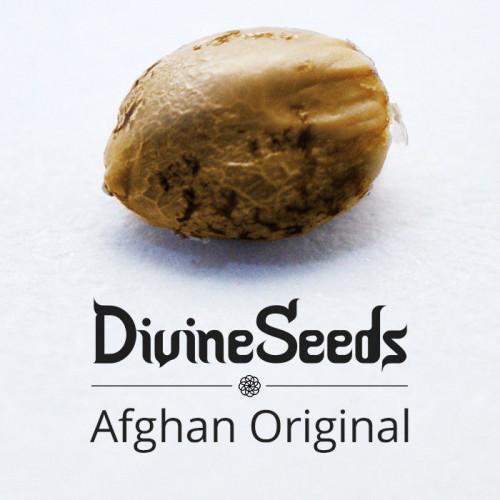 Купить семена Afghan Original