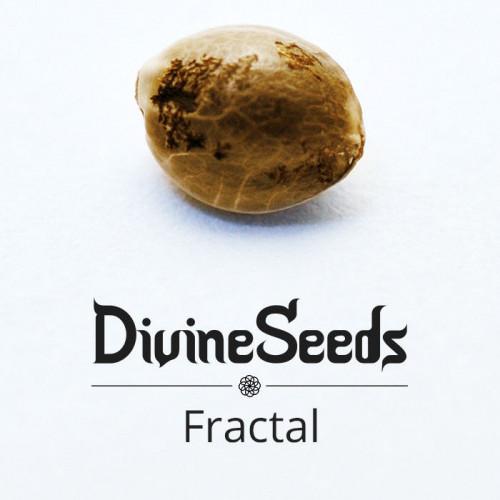 Семена Fractal - фото 1