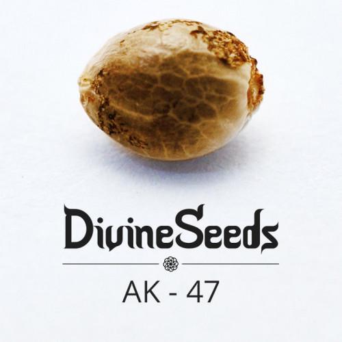 Семена AK-47 - фото 1