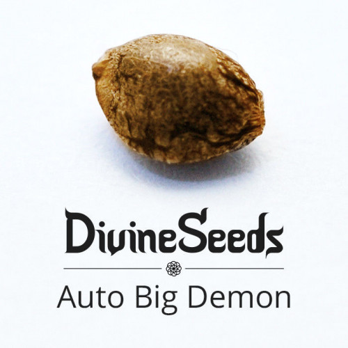 Auto Big Demon