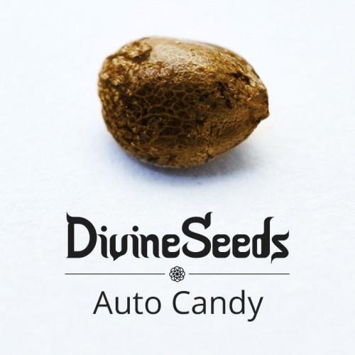 Семена Auto Candy - фото 1