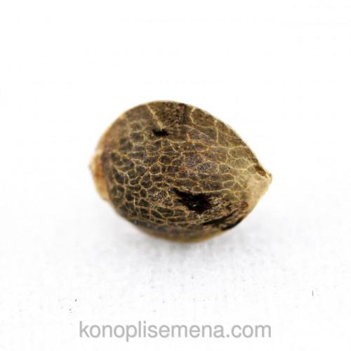 Купить семена Auto Jamaica fem
