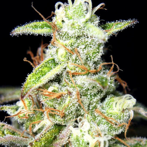 Ак 47 отзывы конопли марихуана обезбаливает