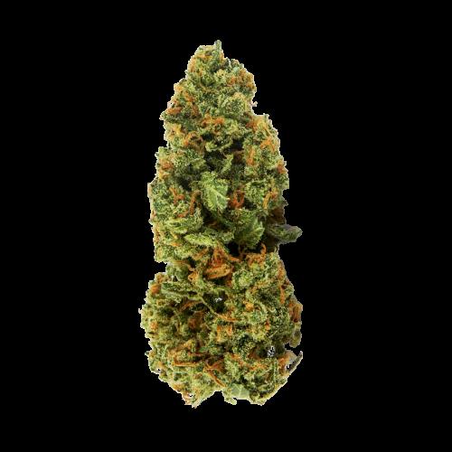 Семена марихуана Auto Jamaica fem