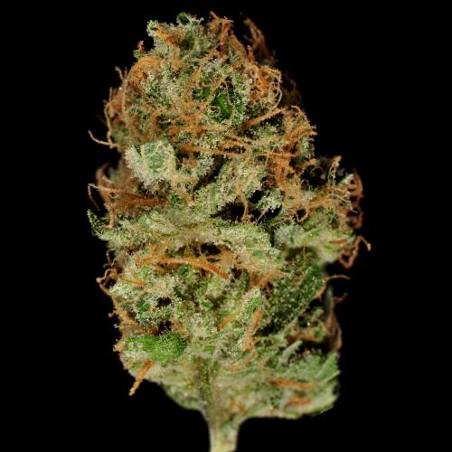 Семена Bubble Gum