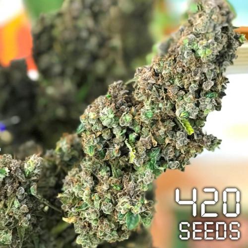 Семена марихуана Auto Green Crack
