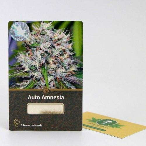 Семена марихуана Auto Amnesia