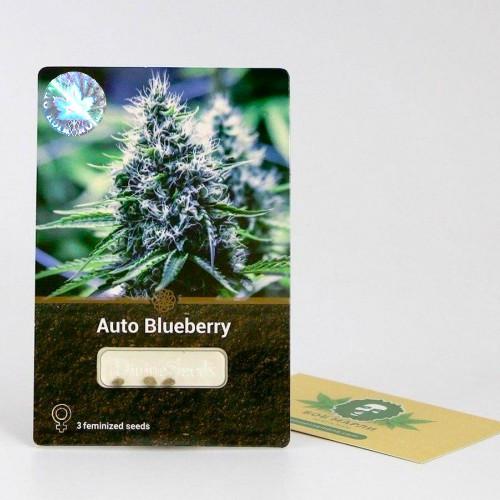 Семена марихуана Auto Blueberry