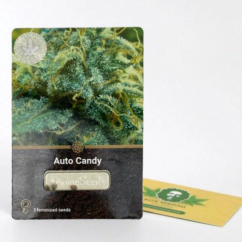 Купить семена Auto Candy