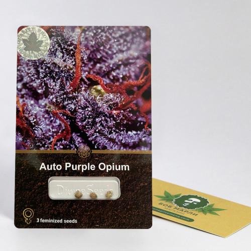 Семена марихуана Auto Purple Opium