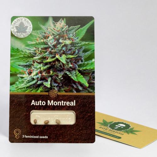 Семена марихуана Auto Montreal