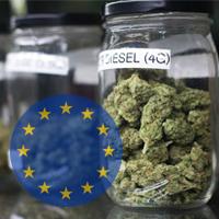 10 фактов о рынках конопли в Европе