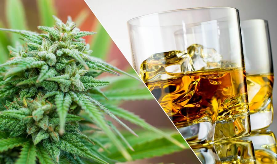 Смешивать алкоголь и марихуану одежда с принтом конопли