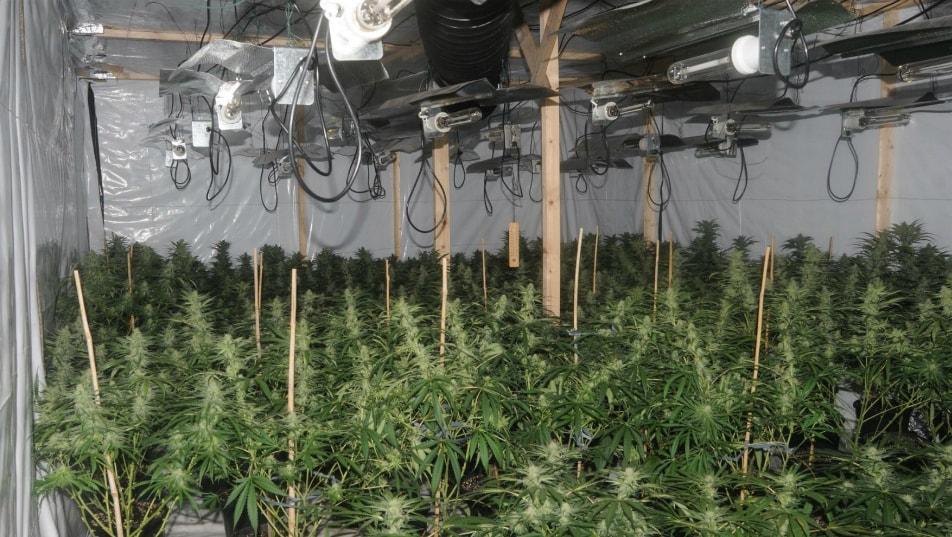 Конопля в аквапоте семена марихуаны алматы
