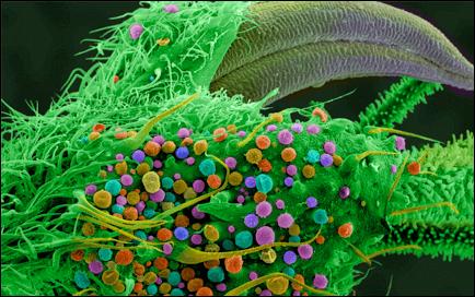 Фото клетка марихуаны марихуана цены спб