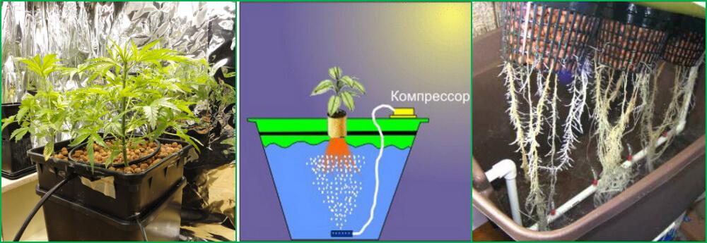 Правильно выращивать марихуану дома гранулы из конопли