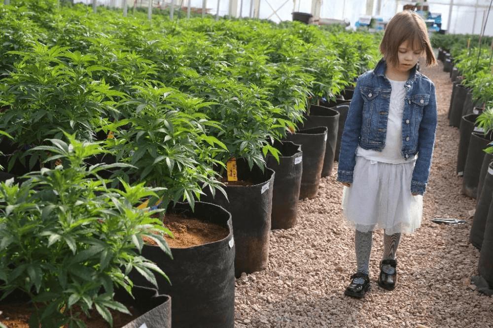 Медицинская марихуана лечение