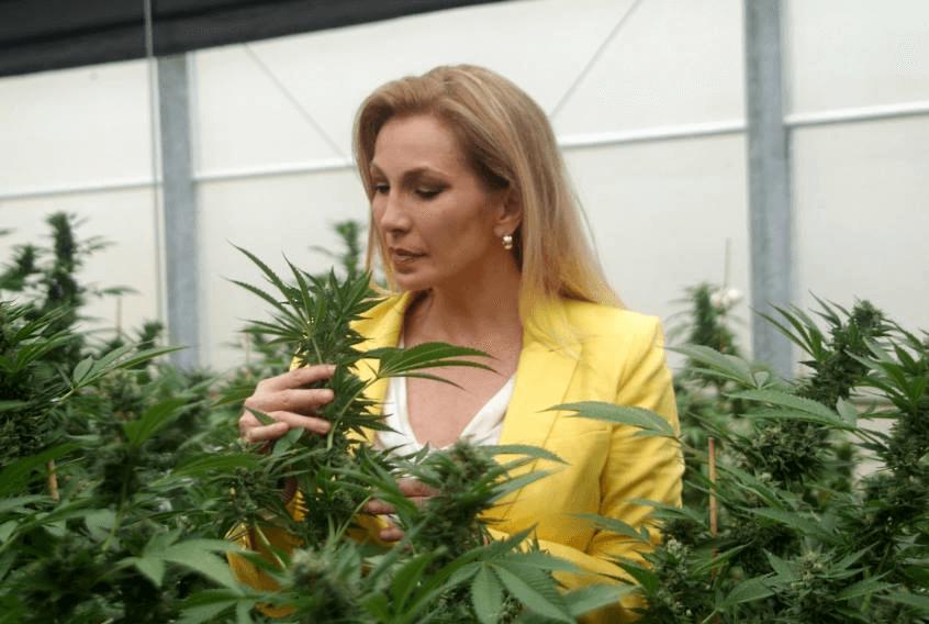 Медицинская марихуана лечебные цели