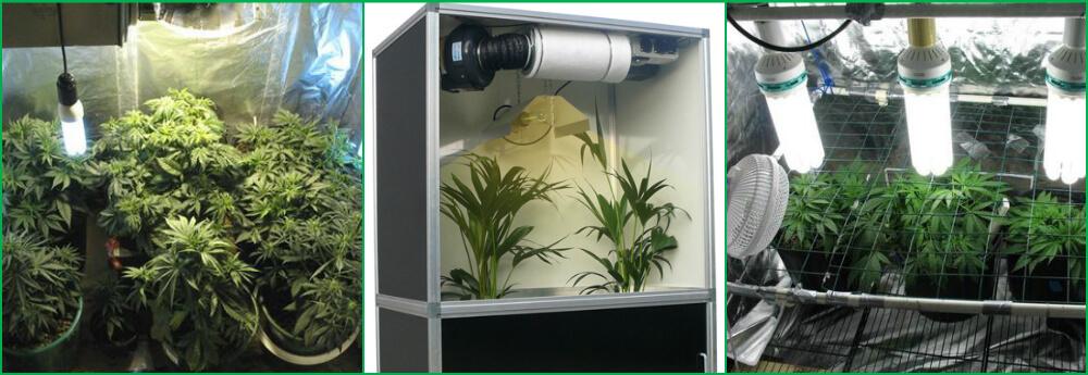 Гроубоксы для выращивания травы 305